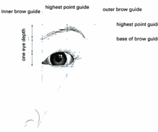 •If the model has a prominent nose, eyebrows should be arched to help balance large features.